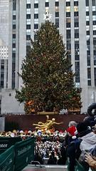 The Tree with Merry Christmas Tuba