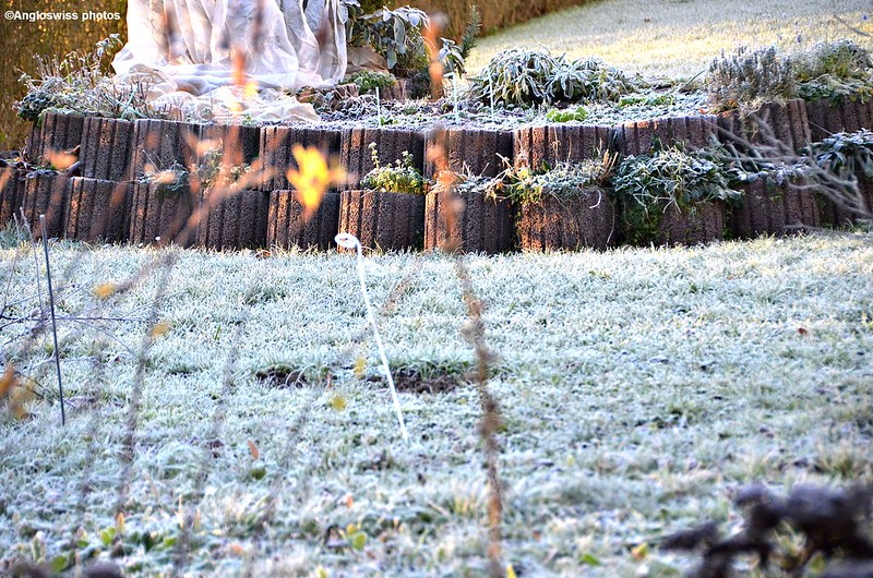 Frost in the garden 23.12.2014