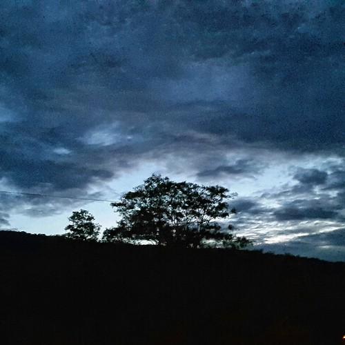 sunset shadow tree mona kingston jamaica uwi