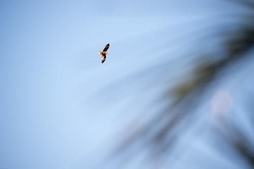 ocean sea sun bird sunshine birds japan sunrise pacific wave chiba 日本 太陽 thepacificocean the 鴨川 千葉県 太平洋 日の出 ご来光 komogawa 太海 鴨川市