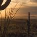 Saguaro National Park-East by ER Post