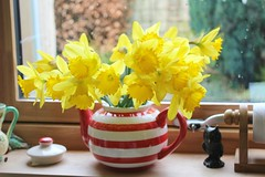 daffs in a teapot!