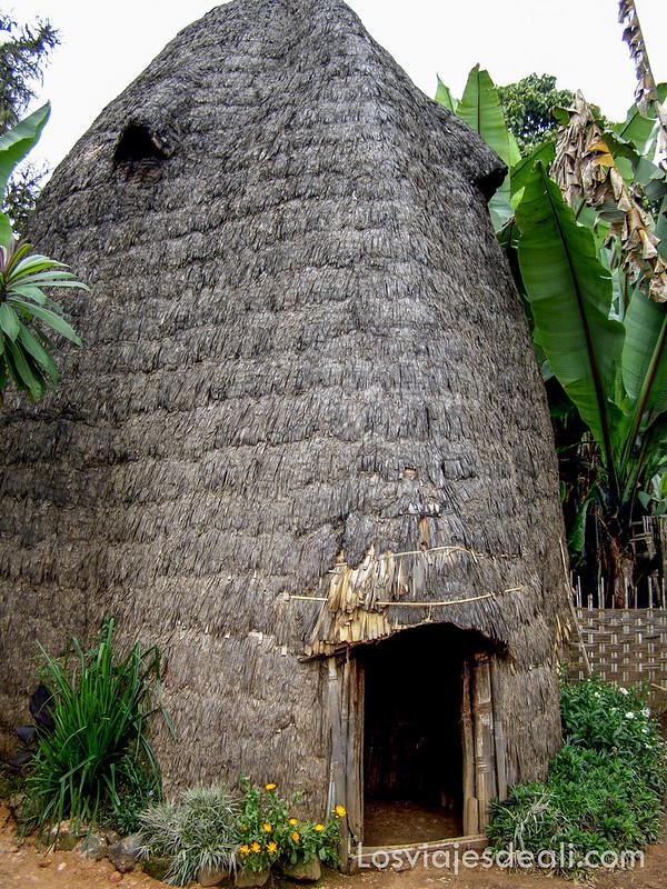 tribu Dorze