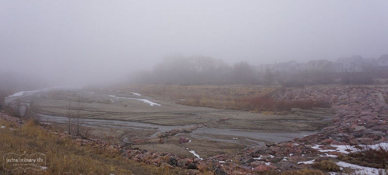 20150120_foggy_tues_afternoon_026-wm