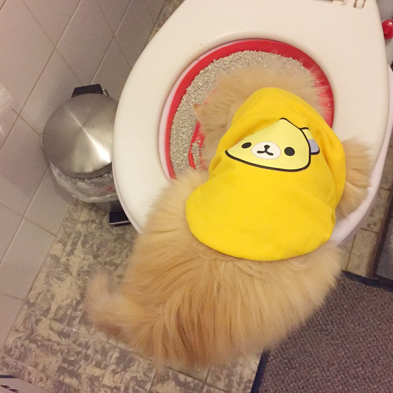 Third Week of Toilet Training: How to switch to another cat toilet training kit