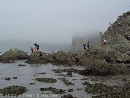 Exploring tide pools en route to Strawberry Point, Olympic National Park, Washington