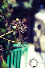 Comienza a llegar la primavera