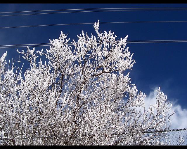 Frosty Day 048a
