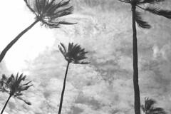 Hanauma Bay - Coconuts