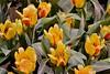 2015 Phladelphia flower show