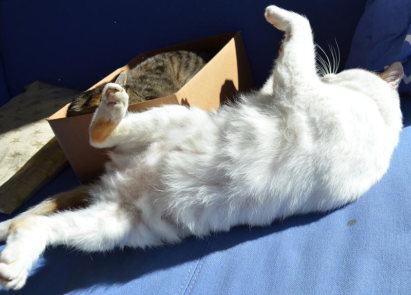 cats4