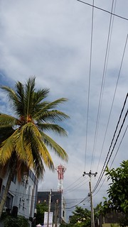 Who is taller Tree or Tower