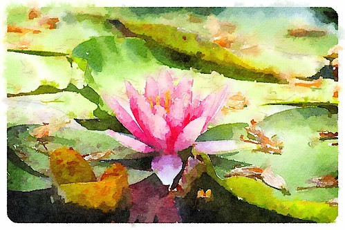 Waterlilly Painted