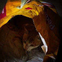 Why #Dogs do not like #Cats? Because cats don't care if they're sleeping inside a #dogfood bag or inside a #kennel. :P #Cute #Pedigree #Kitten #Joy #lol #Funny