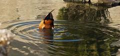 des ronds dans l'eau
