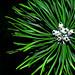 pine tree flower by Māris Pehlaks