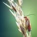 Bug Hunting - 24/07/2016 by Matthew Dartford
