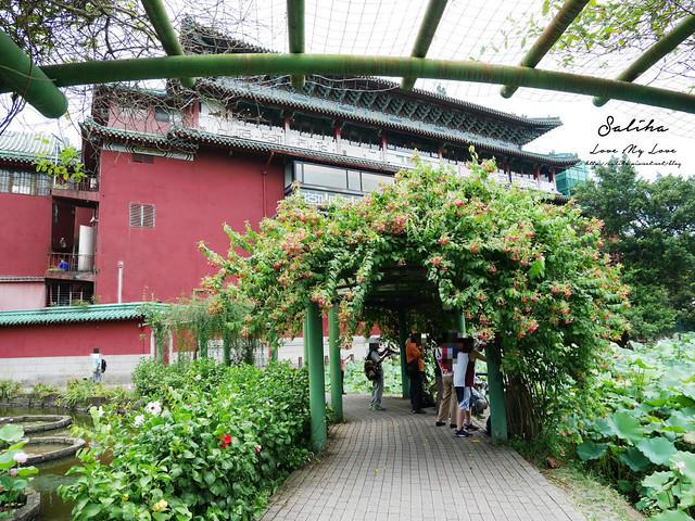 台北一日遊景點推薦植物園荷花蓮花池 (24)