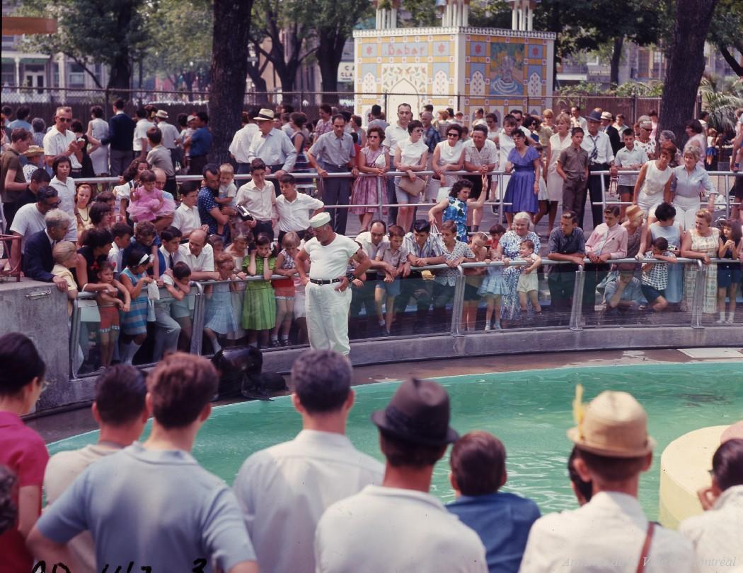 Spectacle de l'otarie au Jardin des Merveilles. – 21 juillet 1969. VM94-Ad-142-003. Archives de la Ville de Montréal.