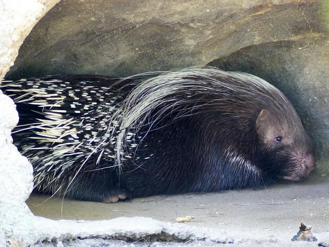 Zoo Miami 14.11.2014 97