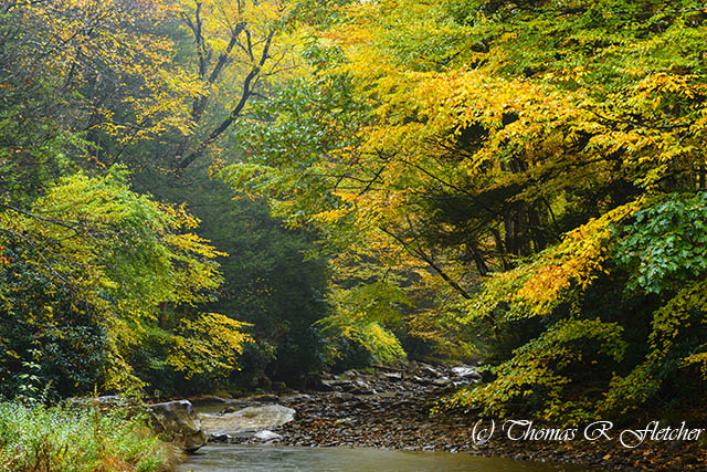 Fall Color Gauley River Headwaters