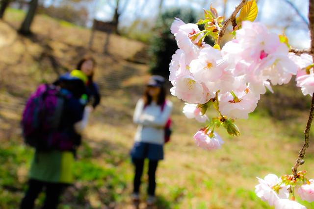 2014-04-19_00218_美の山.jpg