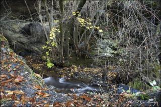 El río y su otoño