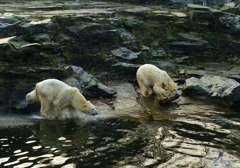 Tierpark Berlin 06.12.2014 13