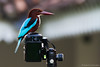 kingfisher goes mirrorless