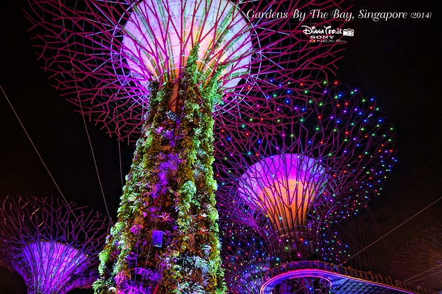 Singapore - Gardens By The Bay 10