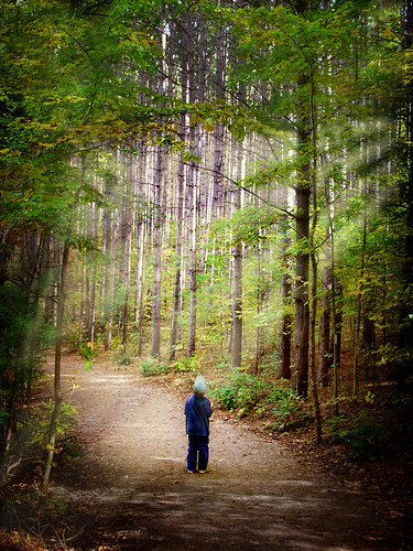 landscapes kitchener ontario forest knarrgallery darylknarr knarrphotography