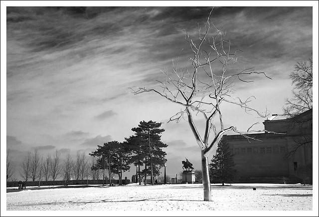 Steel Tree 1