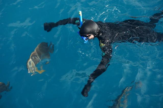 Swimming with batfish