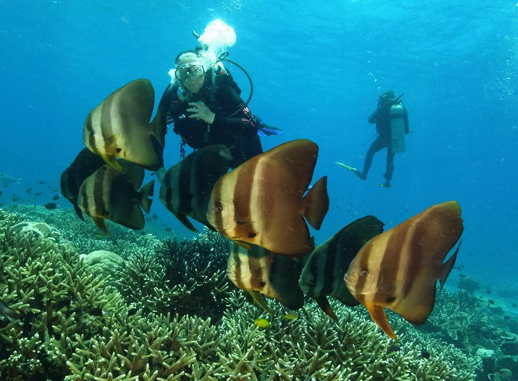 Batfish at Mullaway Reef - Tufi PNG