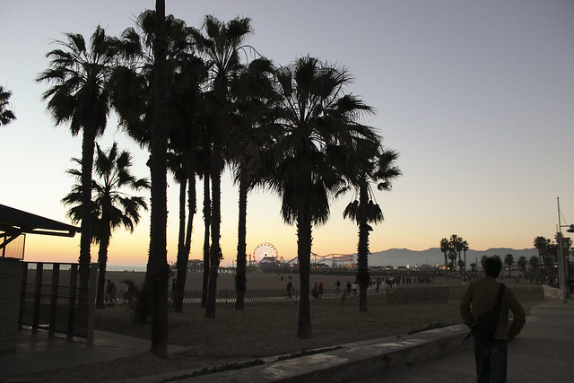 Santa Monica palm trees