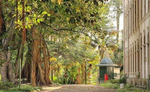 Botanical Garden. Lisbon