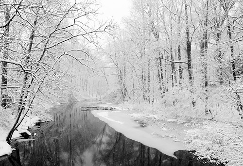 trees winter bw snow water river landscape newjersey unitedstates lawrencebrook northbrunswicktownship