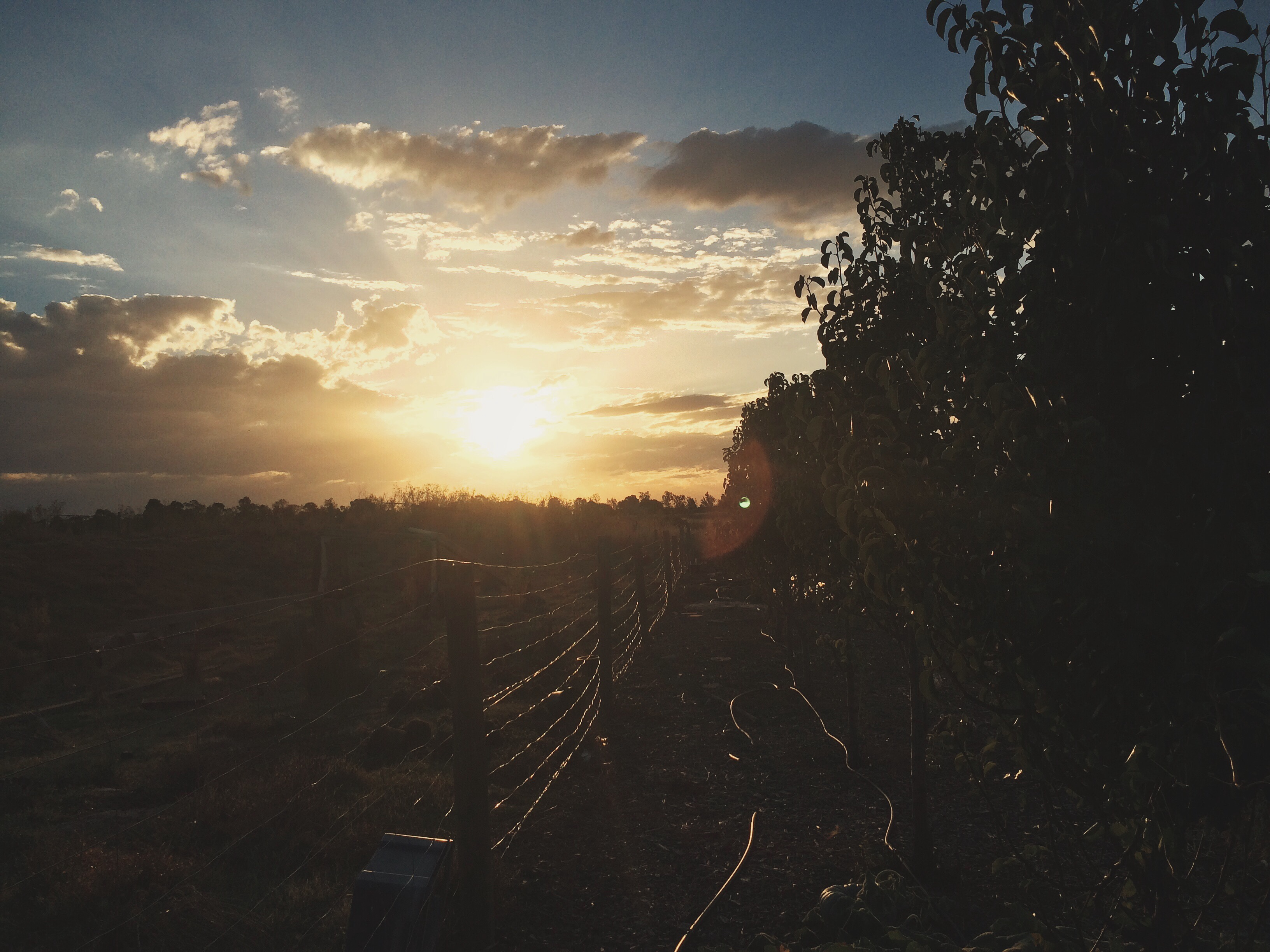 Shepparton, Travel, Australia, Summer, Road Trip, Sunset, Bramble and Thorn