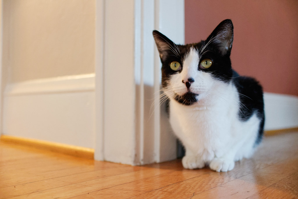 Our black-and-white cat Boo sits next to a corner