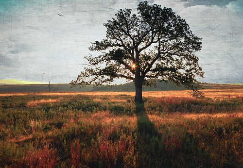 tree fall oklahoma sunrise landscape unitedstates o meadow textures grasses ok travelok wichitamountainsnwr indiahoma