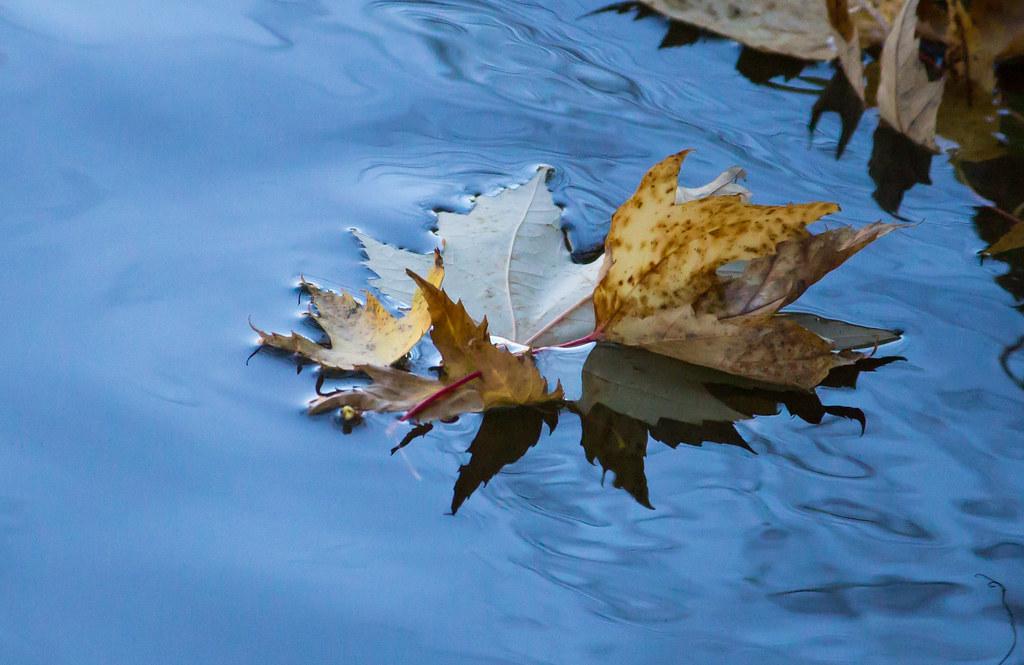 Floating Leaf I