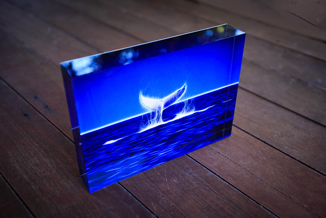"Beautiful 5"" X 7"" Iceblock of a frolicking Humpback Whale off the West Australian coast"