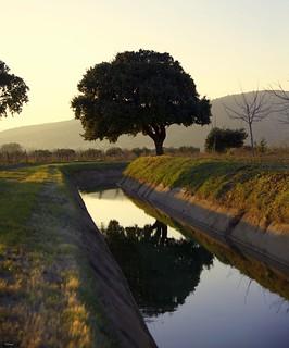 Petit canal entre les vignes