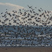 The Birds by KCL Images