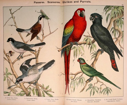 007-Natural history of the animal kingdom for the use of young people..- 1889-William Forsell Kirby