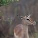 Kruger 2007 day 3.jpg