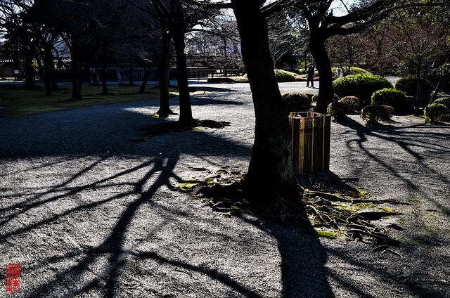 「光と影」 東寺 - 京都