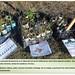 ARBA Tres Cantos - Plantación en Valdecarrizo - Enero 2015