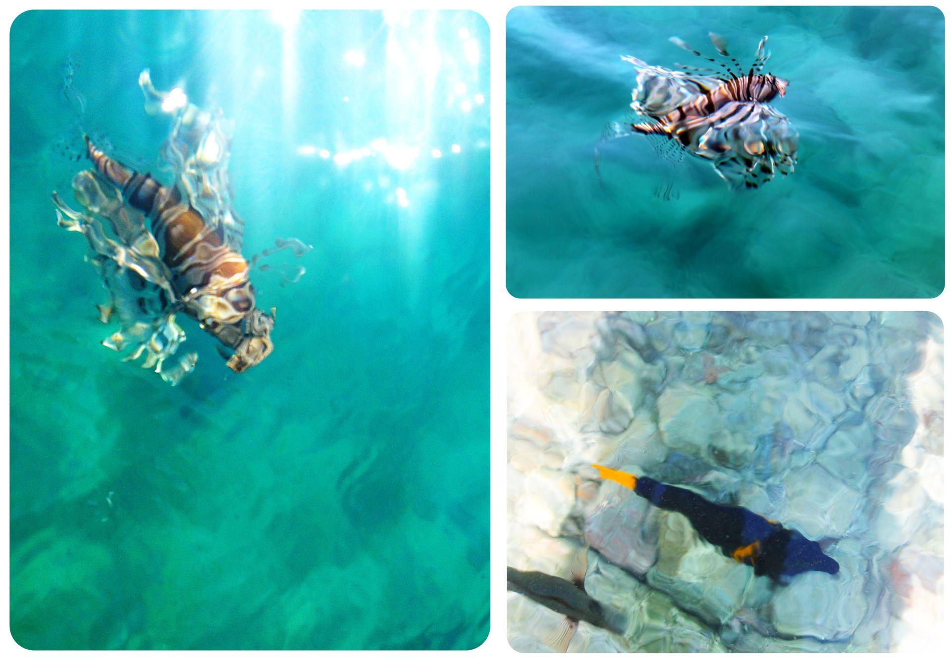 Underwater life eilat