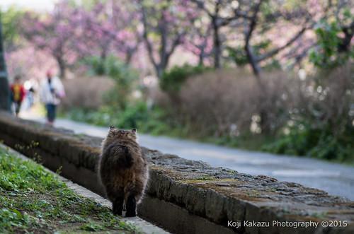 与儀公園 | Naha City, Okinawa 02